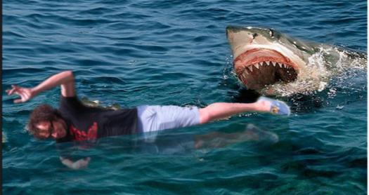 ryanm_shark